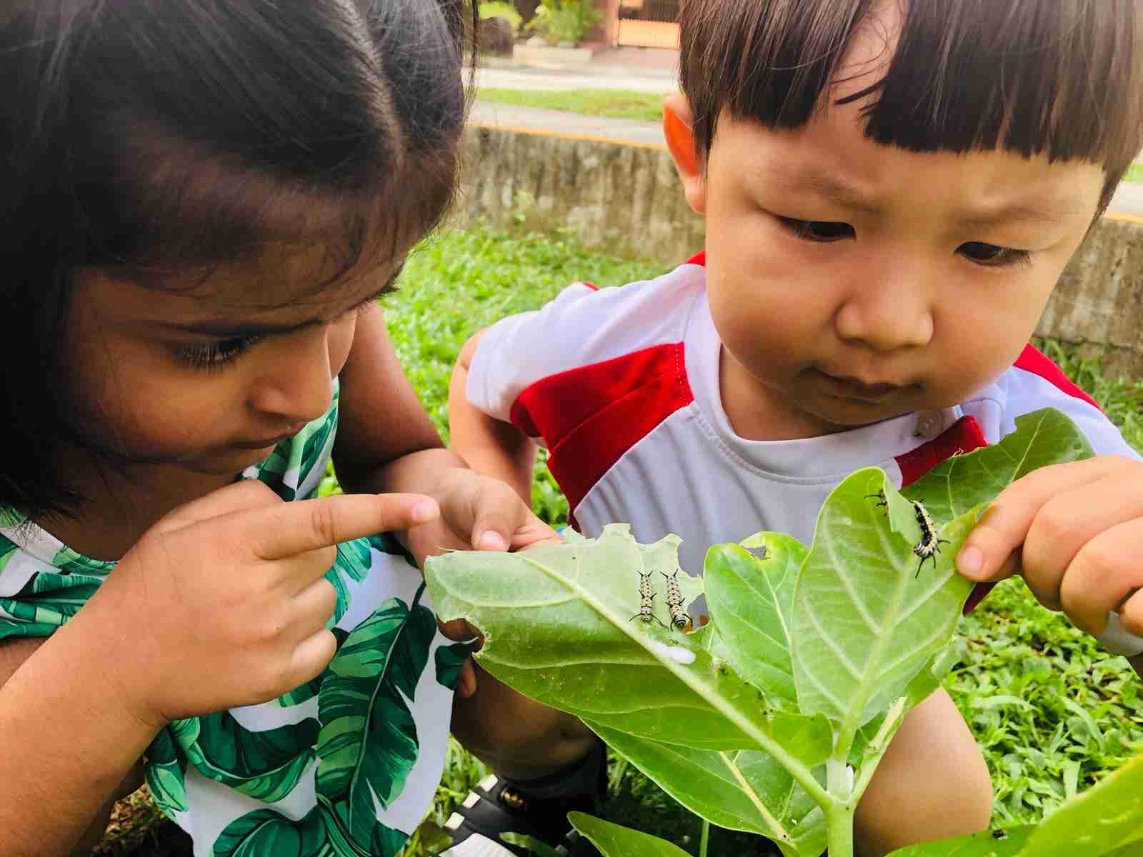 toddlers examining caterpillars